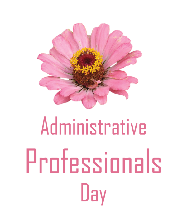 Transparent Administrative Professionals Day Garden Cosmos Cut flowers Transvaal daisy for Secretaries Day for Administrative Professionals Day