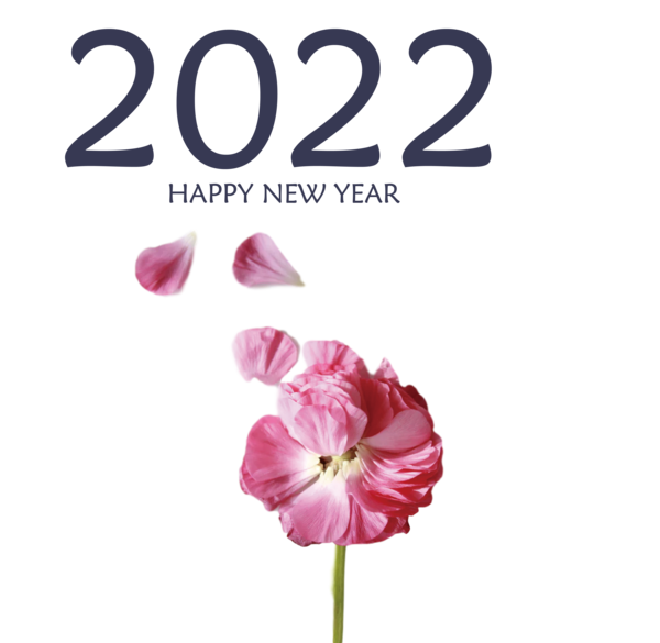 Transparent New Year Herbaceous plant Cut flowers Petal for Happy New Year 2022 for New Year