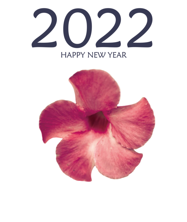 Transparent New Year Flower Moth orchids Petal for Happy New Year 2022 for New Year